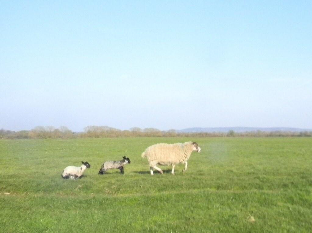 Lambies Haddenham to Aylesbury