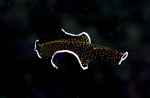 Flight of the flatworm