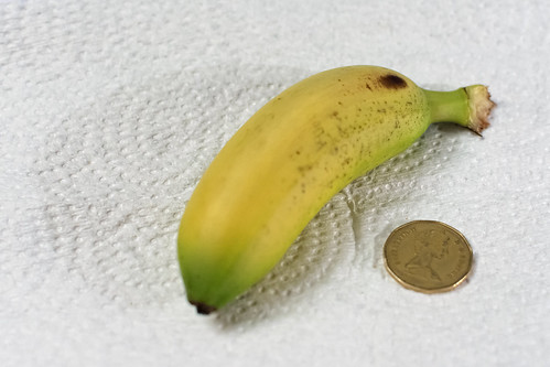 Curiously small banana