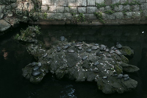turtle rock Narita Gionsai 2015 PENTAX K-S2 12
