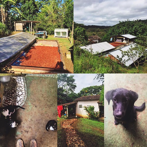 The past week I was volunteering at Fazenda Pura Vida, NGO cacao farm on the Rio de Contas near Taboquinhas. In addition to adopting the farm's philosophy of promoting a healthy and sustainable lifestyle, a mix of hard work and healthy eating made this ex