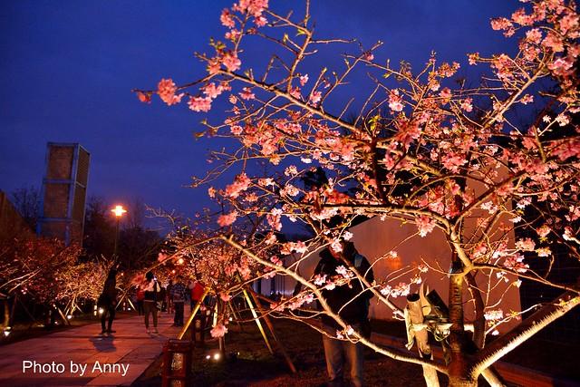 麗池櫻花91