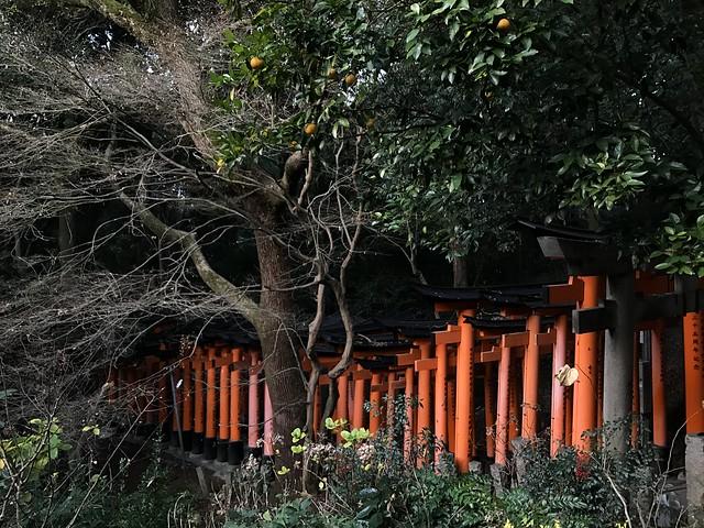 Torrii Gates at Mount Inari