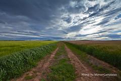 campos bicolor