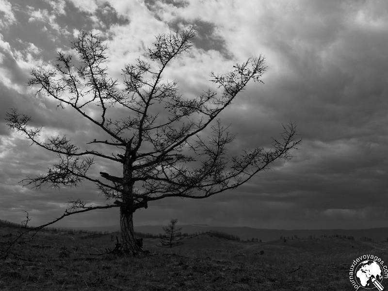 Arbre dénudé sous un ciel menaçant