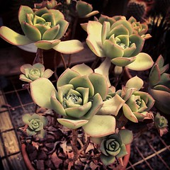 Succulents are cool.