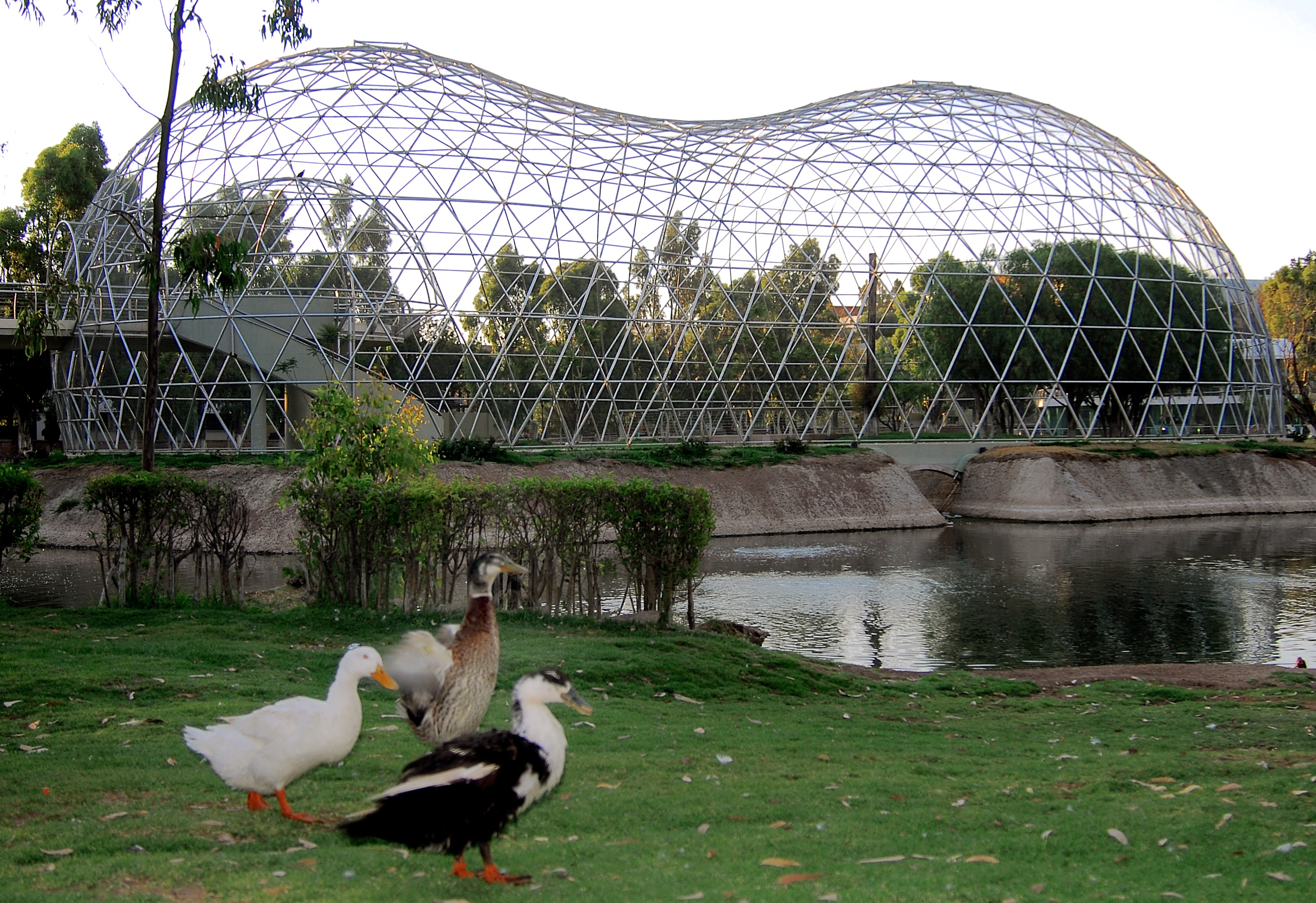 Outdoor Aviary Design