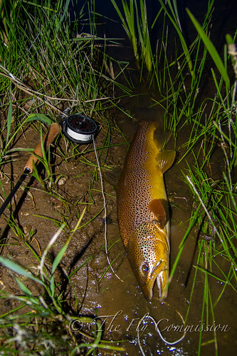 Wild River Brown