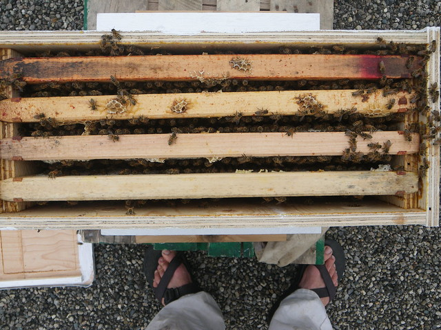 stars nuc box with the warré seed frame removed