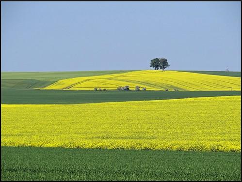 thüringen gelb grün bäume frühjahr