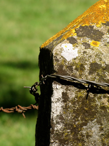Barbed Wire on Stone by K.G.Hawes