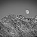 Lead Moon