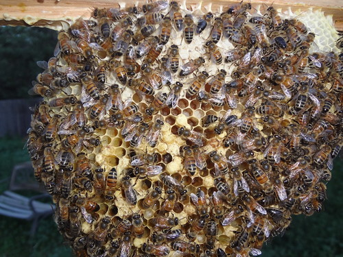 2013.08_bees brood
