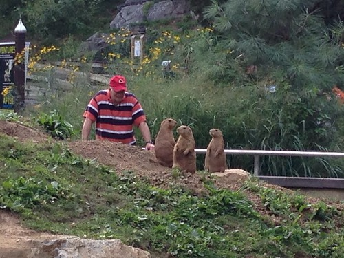 ZooAmerica - Paul with prairie dogs
