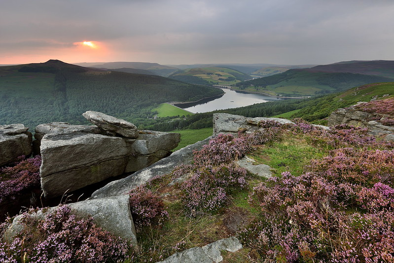 Ladybower Reservoir surrounded by purple heather in bloom from Bamford Edge, with views of Win Hill in the Derbyshire Peak District