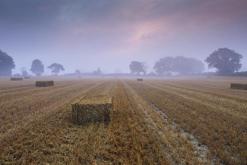 Misty Hay Bales