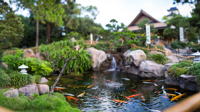 Epcot japan koi pond flickr photo sharing for Japanese koi pond garden design