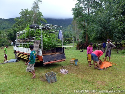 Loading up the Rubber Seedlings to the truck at Accredited Rubber Seedling Nursery in Bacungan, Puerto Princesa City, Palawan, Philippines