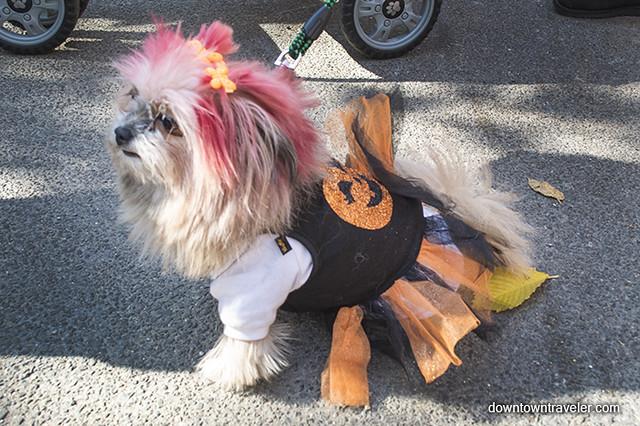 Pomeranian Halloween Costumes For Kids
