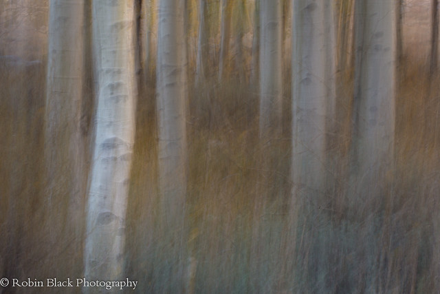 Aspen Abstract 4
