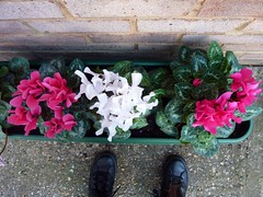 Cyclamens & my feet by Julie70