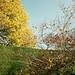 hedge, tree, bush, sky by crabsticky1