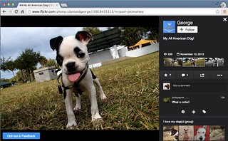 My_All_American_Dog____Flickr_-_Photo_Sharing__and_Flickr__The_Help_Forum__Beta_Test_Page_Opt_Out_Removed_--_Trapped_in_partially_implemented_page-2