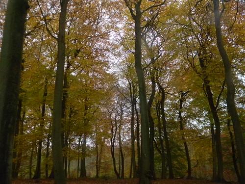Autumn colour 5