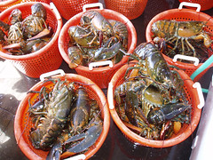 seafood boil(0.0), seafood(0.0), dungeness crab(0.0), dish(0.0), cuisine(0.0), mussel(0.0), spiny lobster(1.0), fish(1.0), invertebrate(1.0), homarus(1.0), food(1.0), american lobster(1.0),