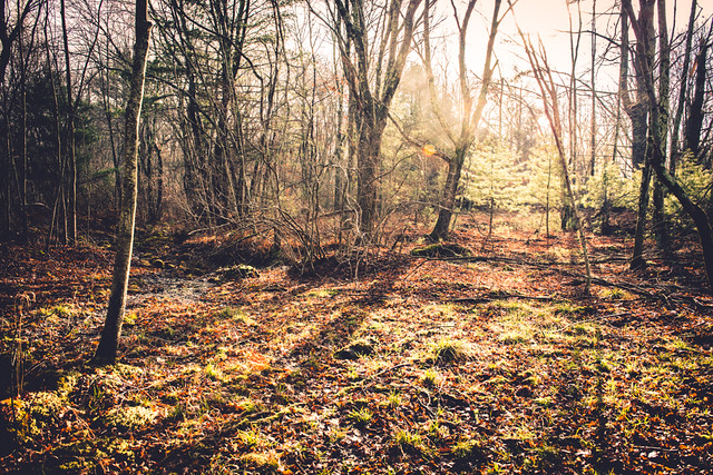 New England Woods