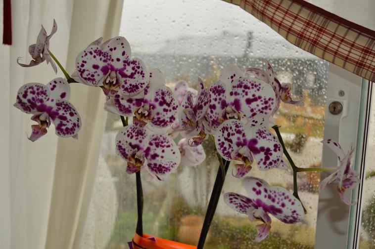 lara-vazquez-madlula-blog-flowers-details