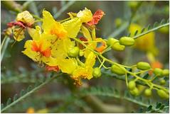 En cette période de l'année, de belles espèces d'arbres et d'arbustes y fleurissent avec exubérance.