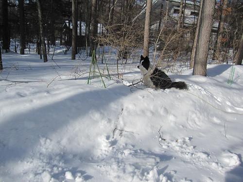 ランディは雪の壁に乗って雪掻きを見学 by Poran111