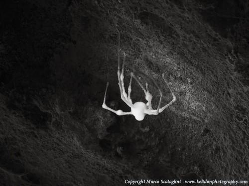 ragno-grotta-respampani