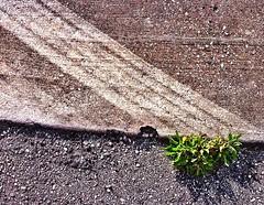 Street-level Cubism