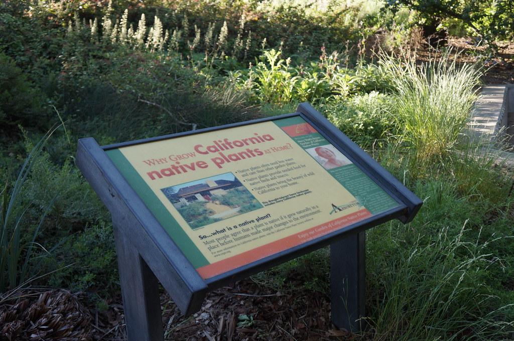 Mary Wattis Brown Garden of California Native Plants