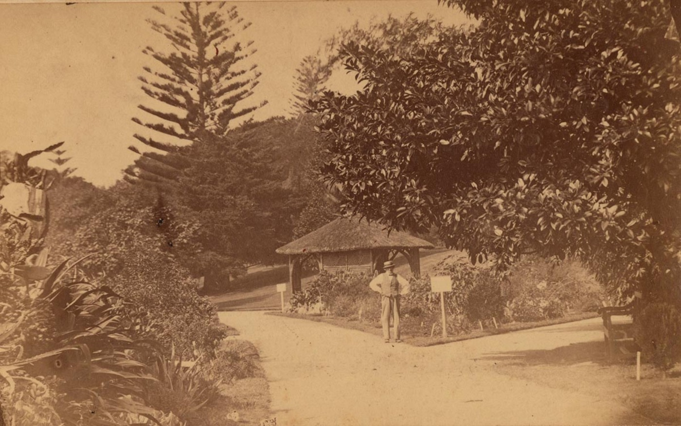 In the Botanic Gardens, 1864-1866, by J.R. Clarke