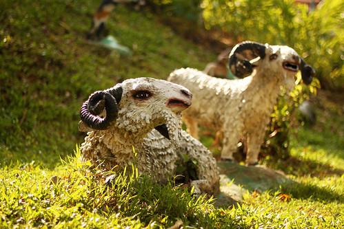 Wailing Goats