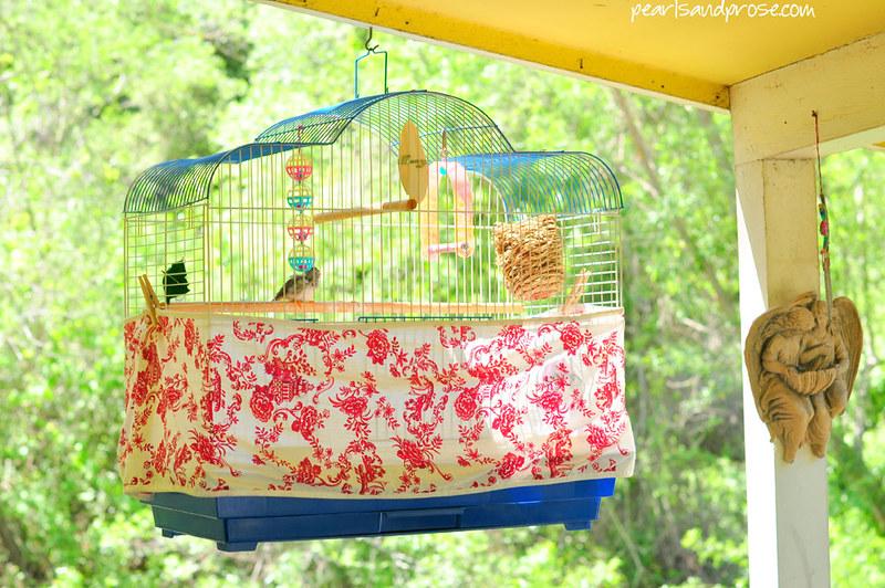 birdcage_closeup_web