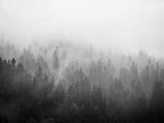 Transylvanian Forest