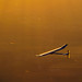 10 July 2010: Borschberg Breaks  the First Solar-Powered Aeroplane Records  Onboard Solar Impulse