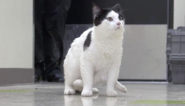 pauly-cat-6-legs