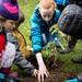 redwood-tree-planting-123