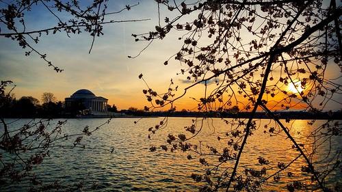 washingtondc sunsets tidalbasin cherryblossomsfestival jeffersonmemorial walkwithme travel cherryblossomfestival
