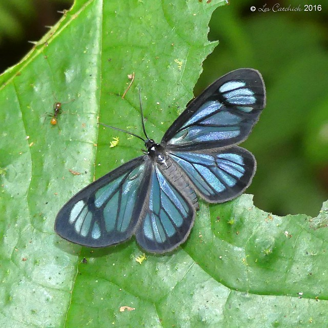 Day-flying moth, Panasonic DMC-FZ330