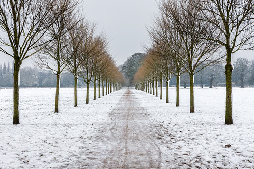 Avenue of Trees 2