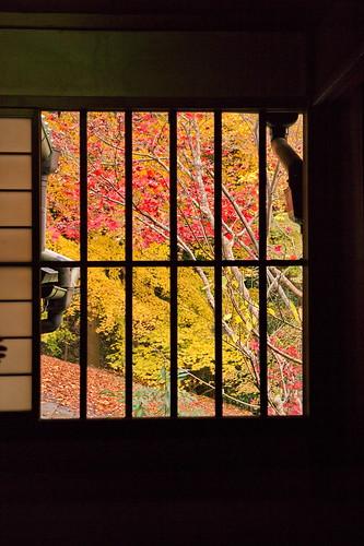 【写真】2012 紅葉 : 瑠璃光院/2020-06-07/IMGP7667