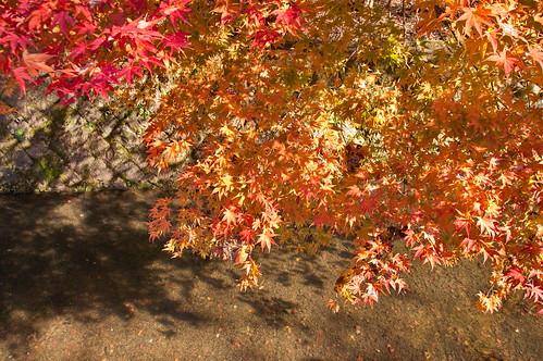 【写真】2012 紅葉 : 哲学の道/2020-10-03/IMGP7378