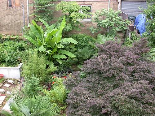 Garden, late June