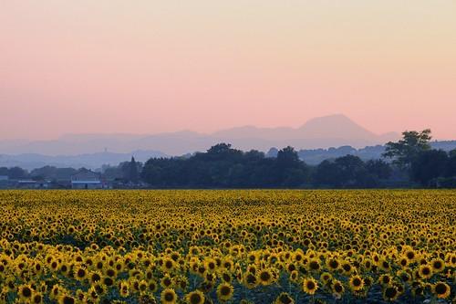 sunset italy panorama parco night landscape san italia tramonto vale clear sunflower conero marche girasoli vicino musone